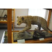 Sbírky Muzea jihovýchodní Moravy ve Zlíně jsou nyní k vidění v nové přírodovědné expozici v Napajedlích