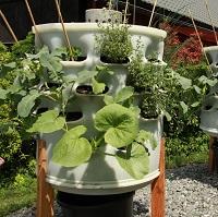 Berdík, revoluce v pěstování zeleniny. Nová éra městského zemědělství začíná